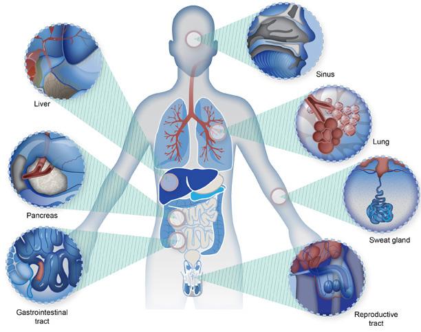 Medical illustration In Best Private Medical College